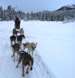 Alaska and ASQ Online: A case study